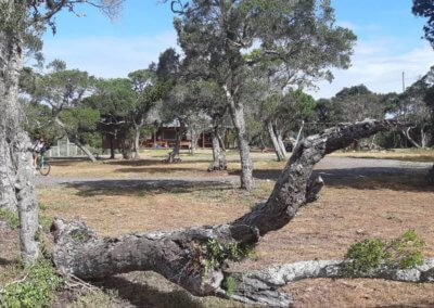 Bushwillow extended playground 7